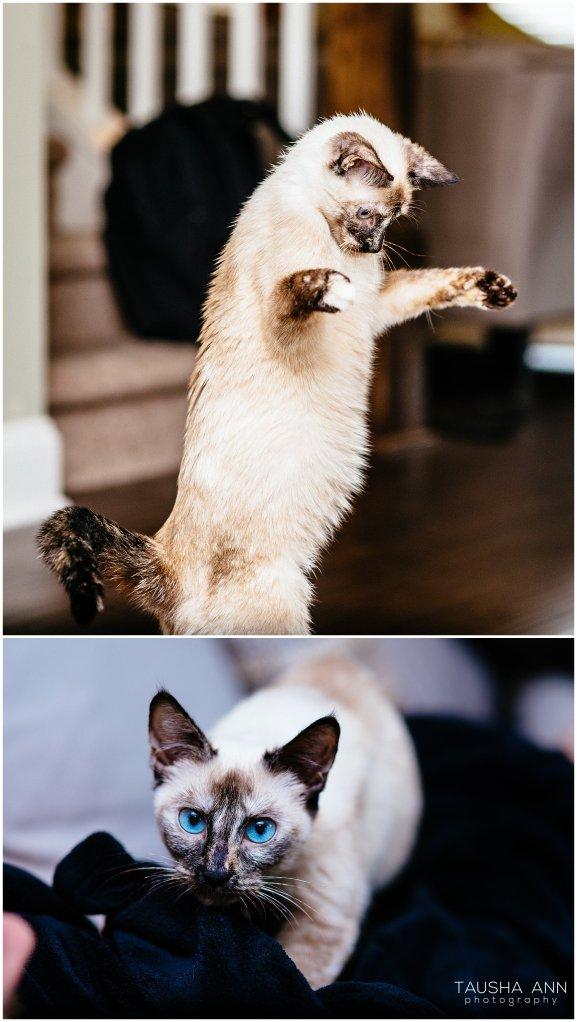 Jazzy_The_Cat_Animal_Photography_Nashville_02
