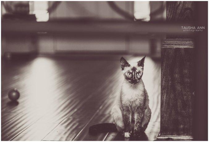 Jazzy_The_Cat_Animal_Photography_Nashville_04