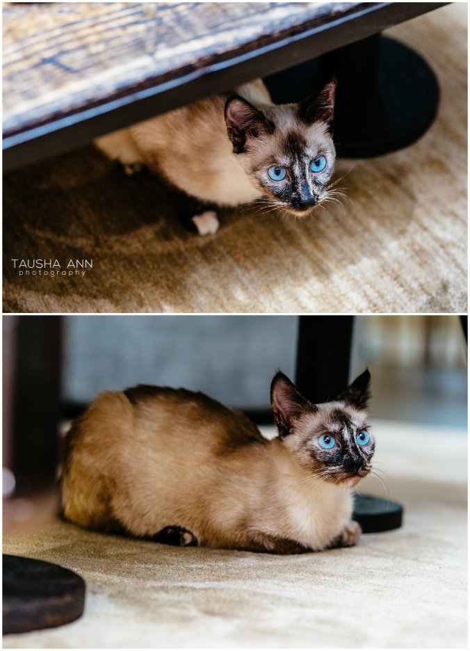 Jazzy_The_Cat_Animal_Photography_Nashville_05