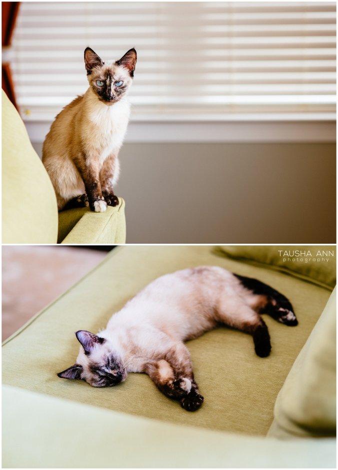 Jazzy_The_Cat_Animal_Photography_Nashville_08