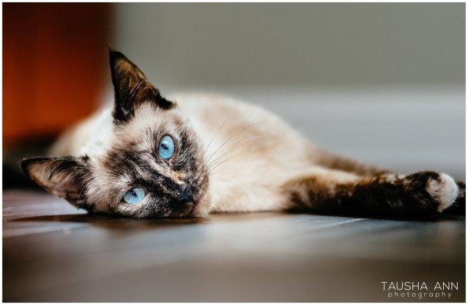 Jazzy_The_Cat_Animal_Photography_Nashville_10
