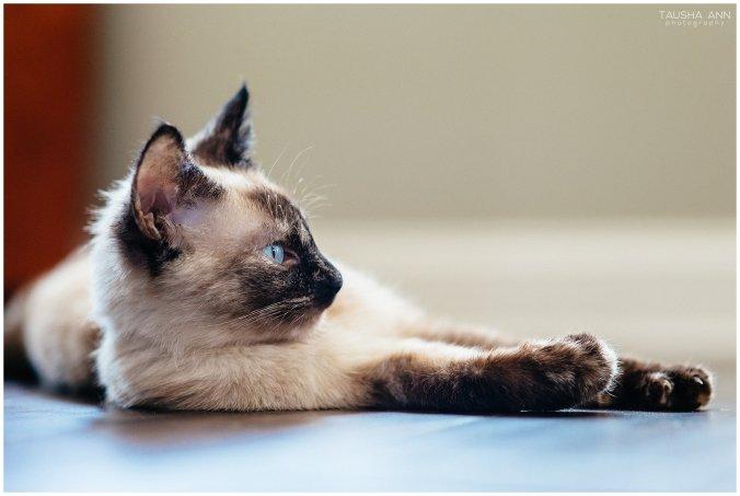 Jazzy_The_Cat_Animal_Photography_Nashville_11