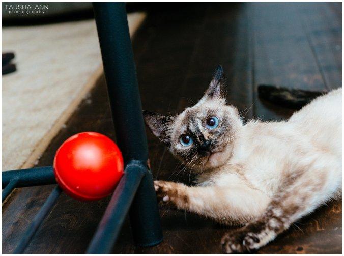 Jazzy_The_Cat_Animal_Photography_Nashville_12