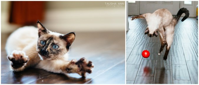 Jazzy_The_Cat_Animal_Photography_Nashville_13