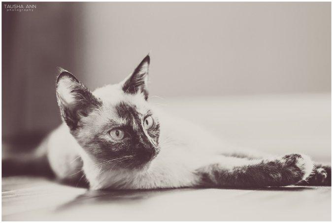 Jazzy_The_Cat_Animal_Photography_Nashville_14