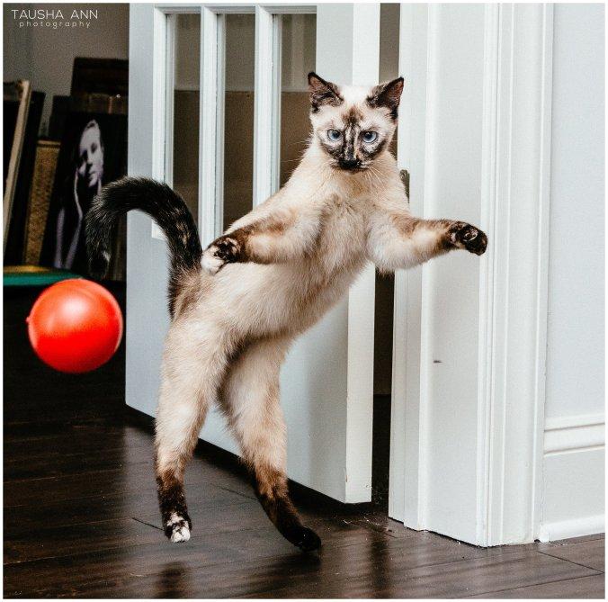 Jazzy_The_Cat_Animal_Photography_Nashville_15